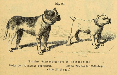 The Two Types of Bullenbeisser: Danzig & Brabant