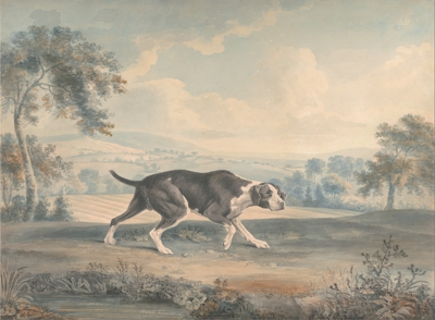 Painting of an Old Spanish Pointer by John Buckler