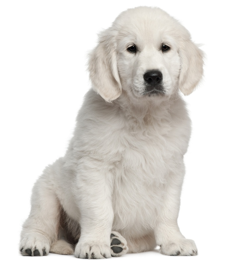Stages Of Puppy Development Puppies Articles Dogzonecom