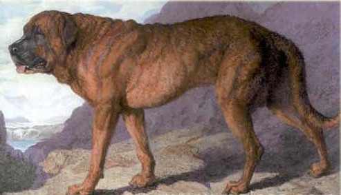 1815 Painting of Alpine Mastiff