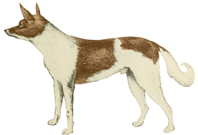 Fuegian Dog