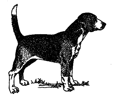 Northern Hound, or the North Country Beagle