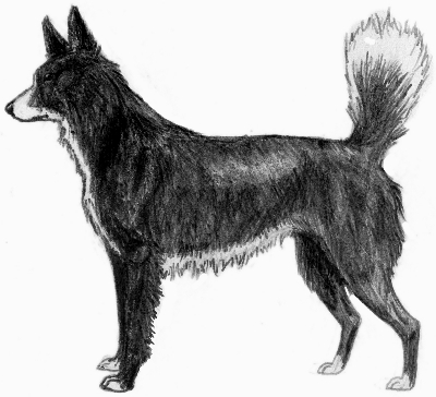 Tahltan Bear Dog