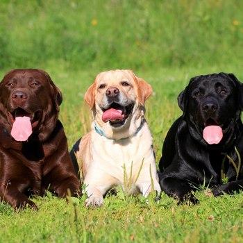 L Breeds Dogzone Com