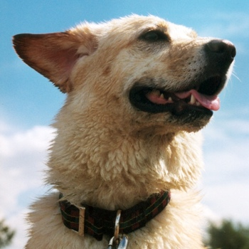 Photo of adult Labrakita