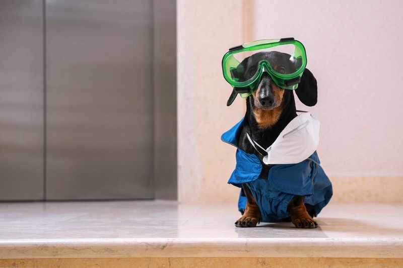 Dachshund with goggles and a lab coat